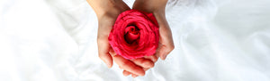 picture of hands holding a rose
