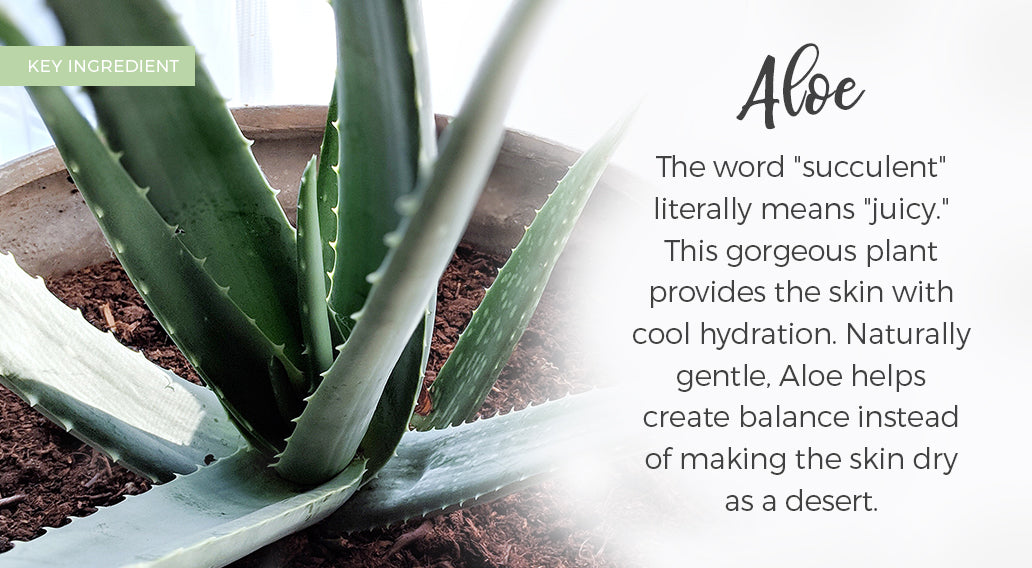 picture of key ingredient aloe and its benefits