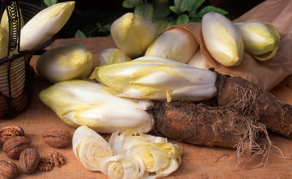 chicory root inulin