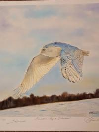 Snowy Owl Print by James Fiorentino