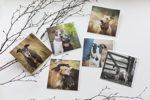 Pack of 6 'pointy dog' greetings cards