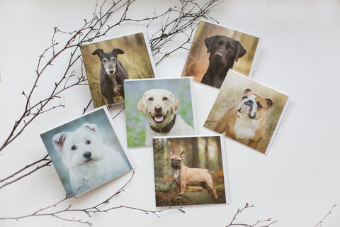 Mixed pack of 6 dog greetings cards