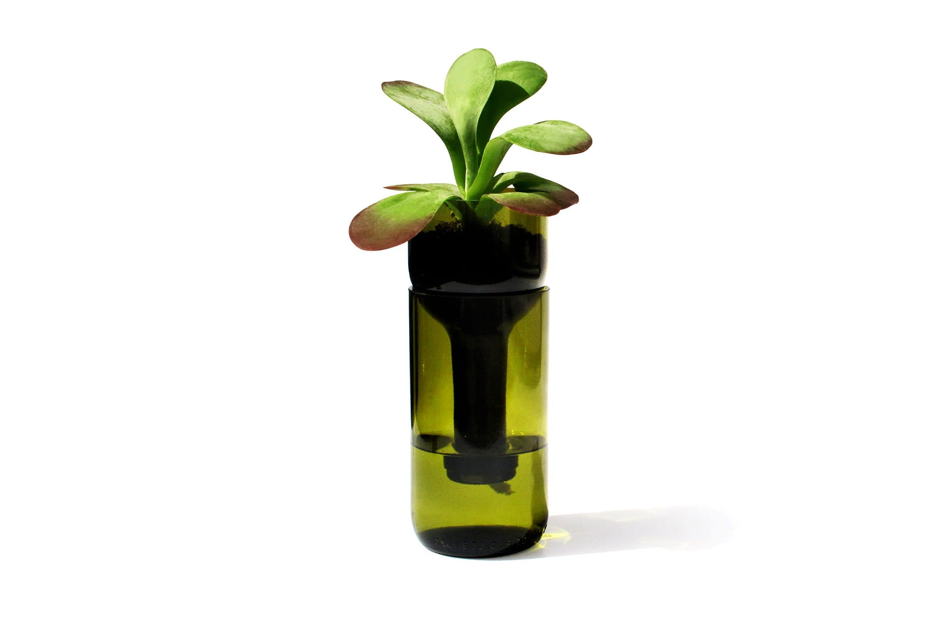 Jardinière autonome vert bouteille Watering Bottle by SideBySide-PARIDEO design durable