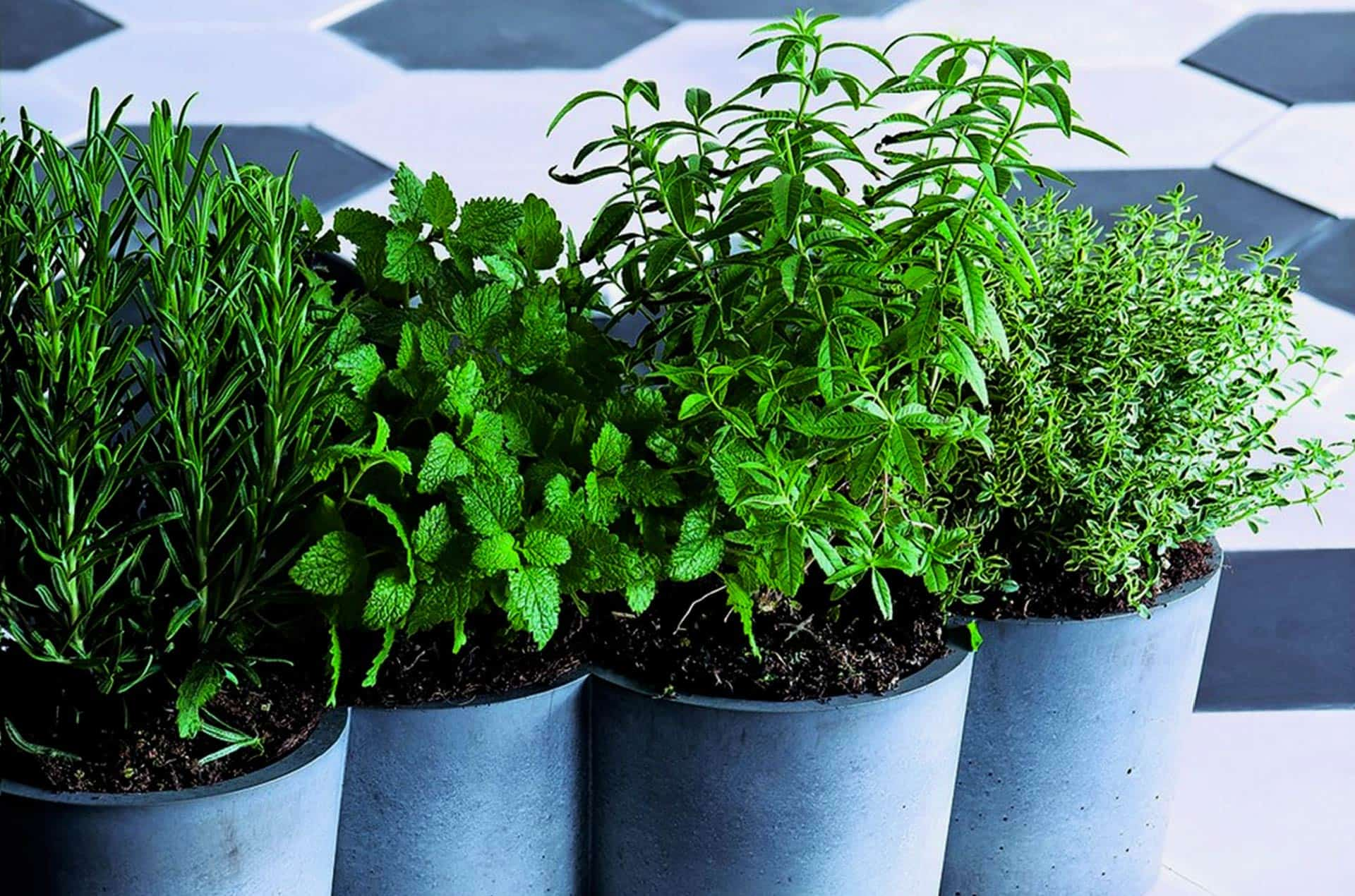 Pot plantes en béton, POTPOT by Konstantin Slawinski-PARIDEO design durable