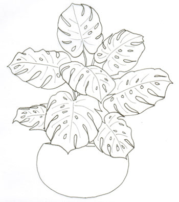1 credit 1 credit monstera deliciosa coloring page