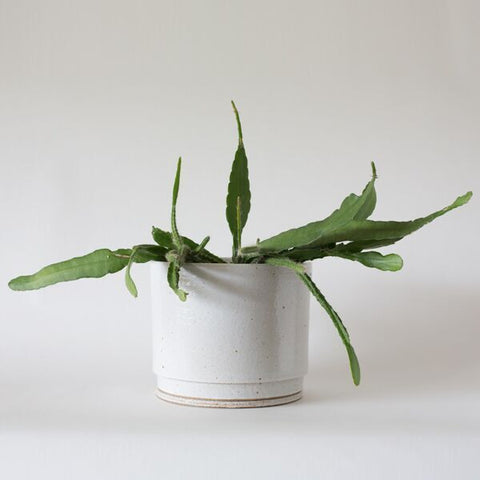 anchor ceramics planter no.33 | large