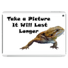 bearded dragon Tablet