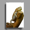 central bearded dragon Poster Print (Portrait)