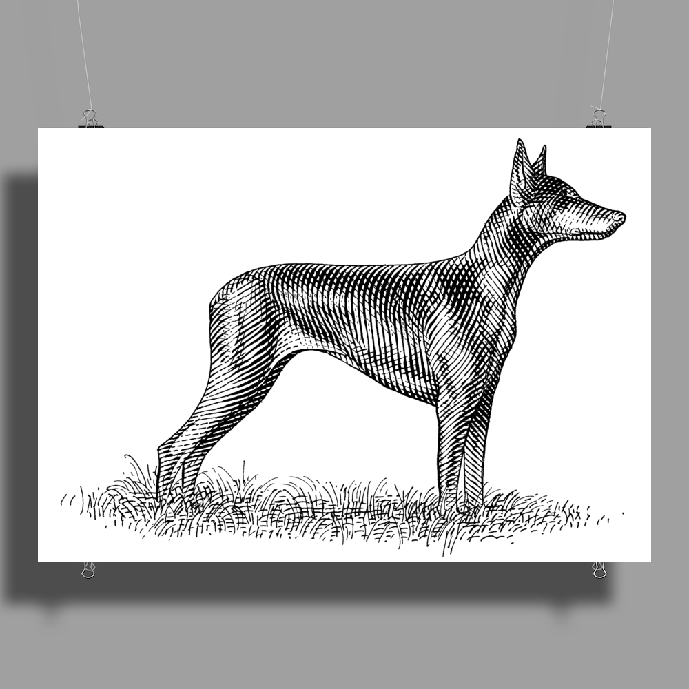 Doberman Pinscher Dog Breed Revision Poster Print (Landscape)