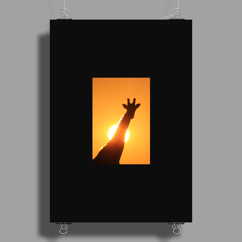 Giraffe Silhouette - Beauty of Color and Freedom Poster Print (Portrait)
