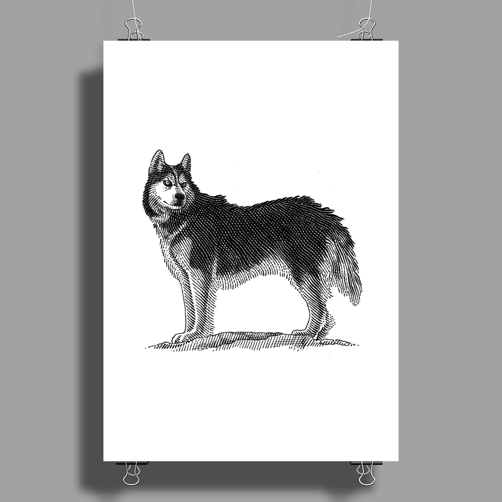 Husky, Dog Breed, Illustration Poster Print (Portrait)