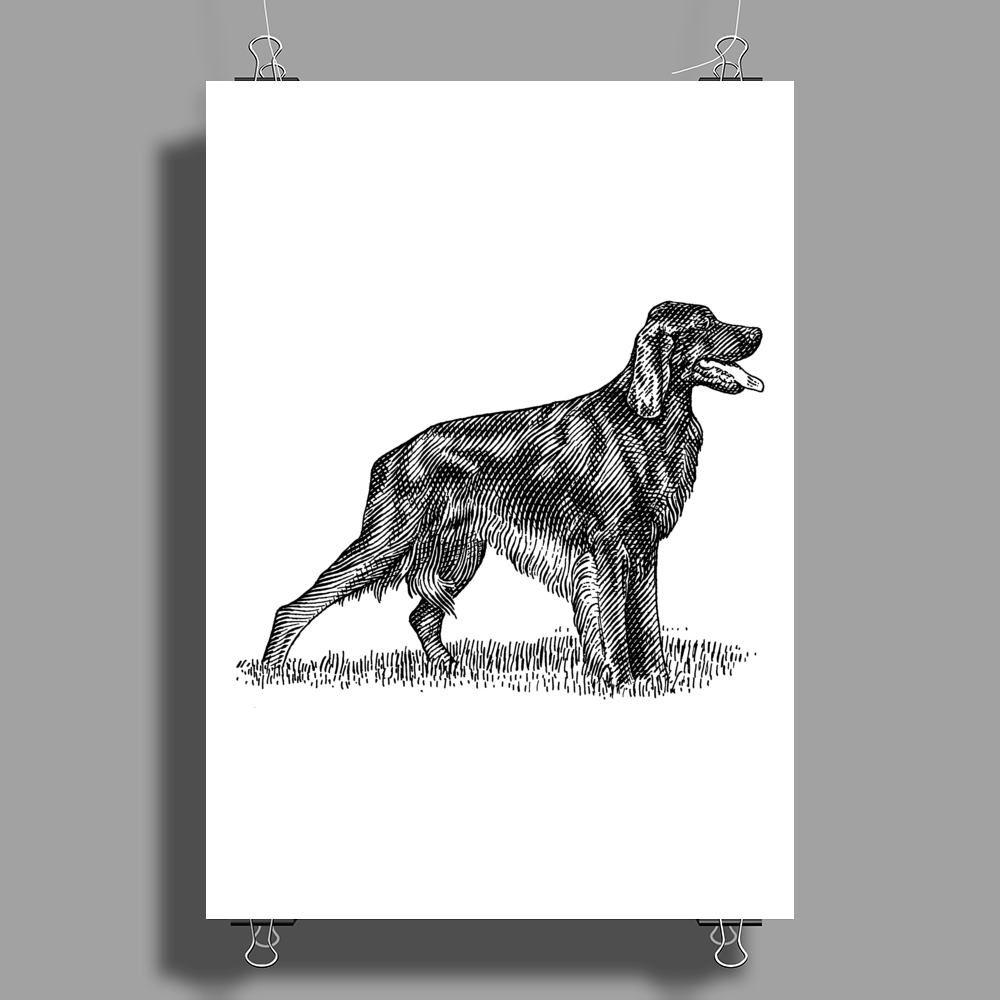 Irish Setter Dog Breed Poster Print (Portrait)