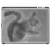 Pencil squirrel Tablet