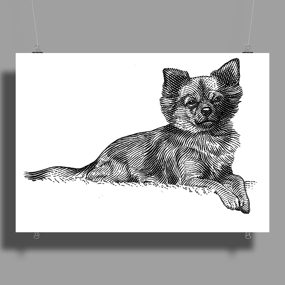 Pomeranian Dog Breed Illustration Poster Print (Landscape)
