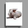 Rabbit Poster Print (Portrait)