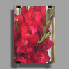 Red Gladiolas Poster Print (Portrait)