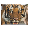 Tiger Roar Tablet