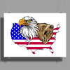 united states of america stars and stripes eagle grizzly bear Poster Print (Landscape)
