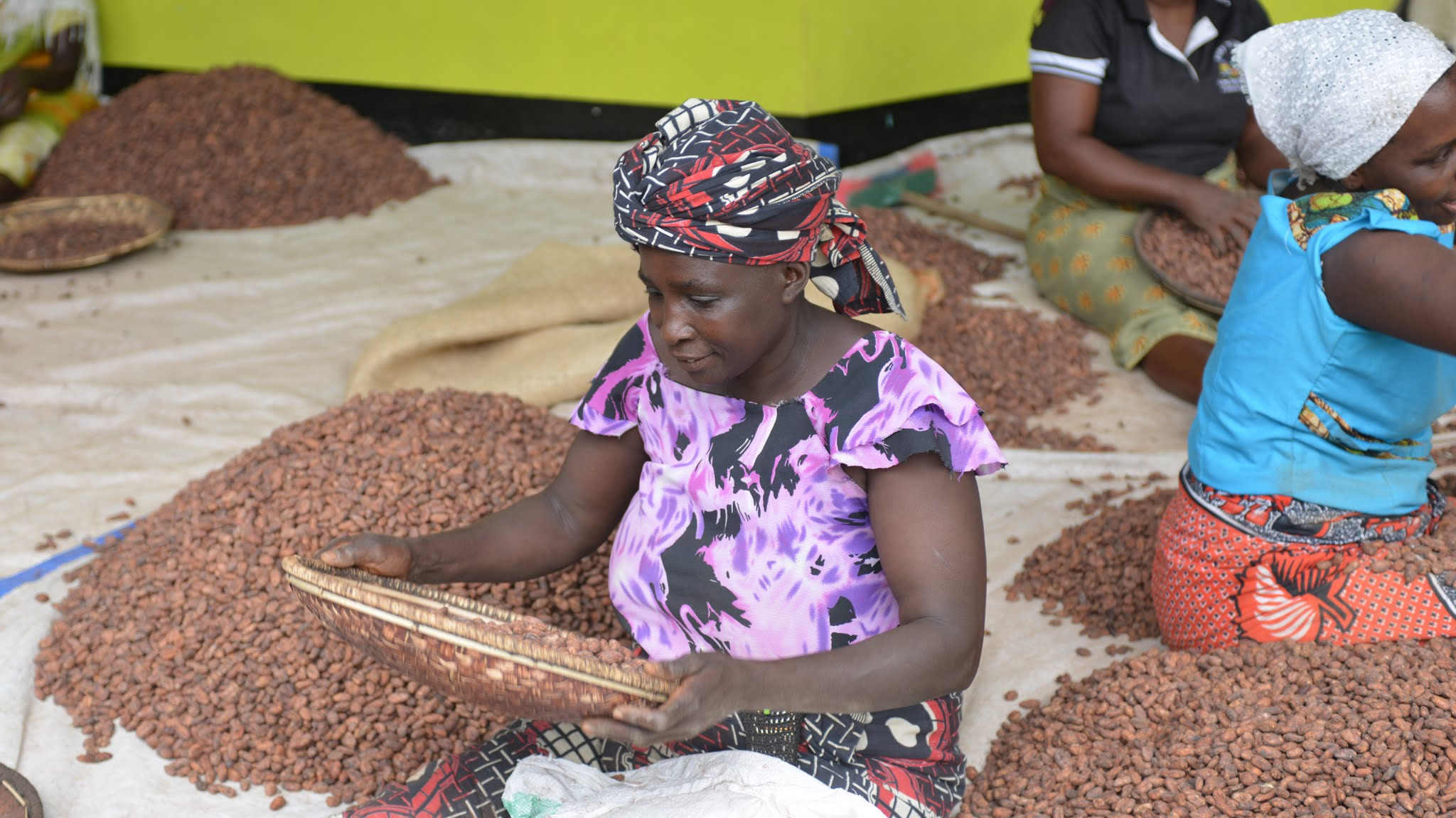 three women sorting Tanzania cacao