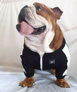 Tracksuit for Pets