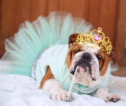 Queen Outfit - Tutu Dress with Crown  UAUH DOGS