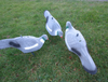 10 x HD PIGEON DECOY SHELL FLOCKED, MOVING PEG PATTERN SHOOTING PIGEONS