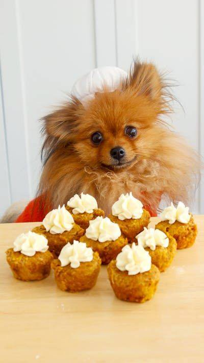 Pumpkin Banana & Cream Cheese Cupcakes For Dogs