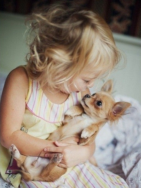 Chihuahuas and Children