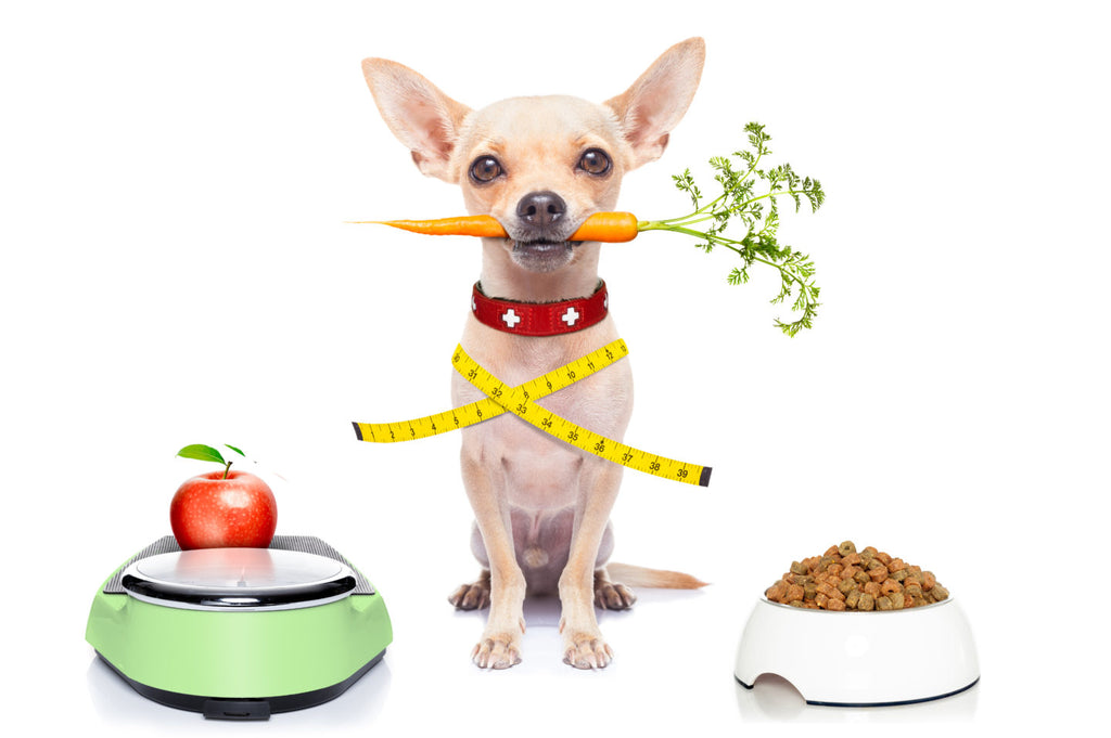 4 Harmful ingredients for your dog