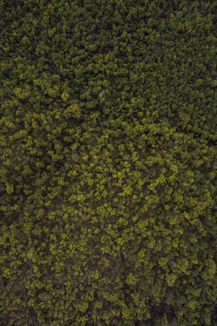 Treetops-Birds-Eye-View
