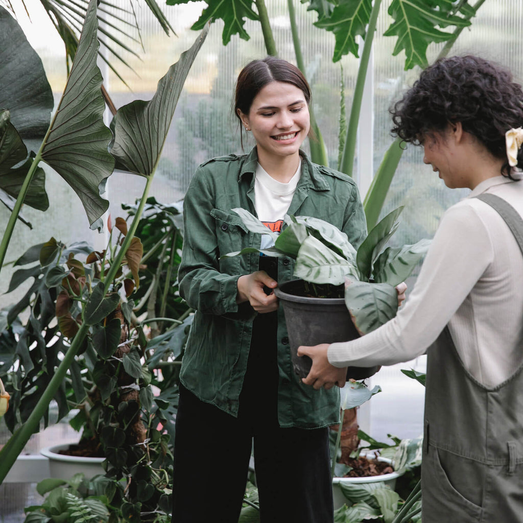 A girl helping another choose a plant
