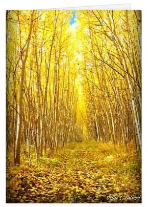 Colonnade of Aspen in the Fall Greetings Card