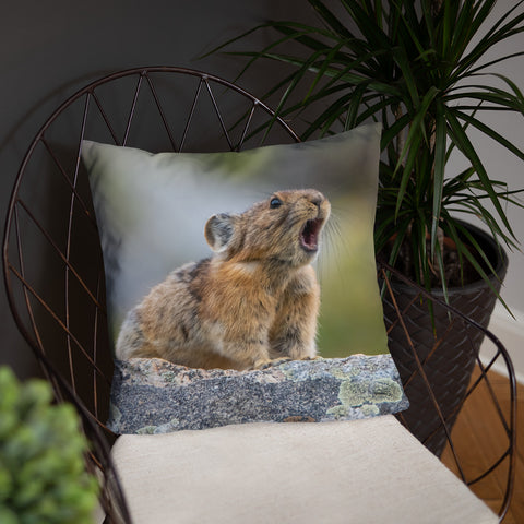 Pikas Don't Squeak They Roar