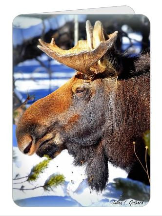 Bull Elk Double-Sided Gretings Card
