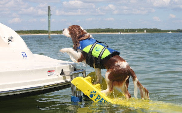 Tips for Pontoon Boating with Dogs | Pontoon-Depot