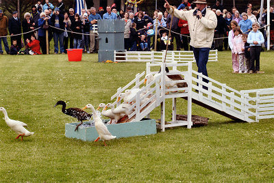 Drakes of Hazzard at Wensleydale Show