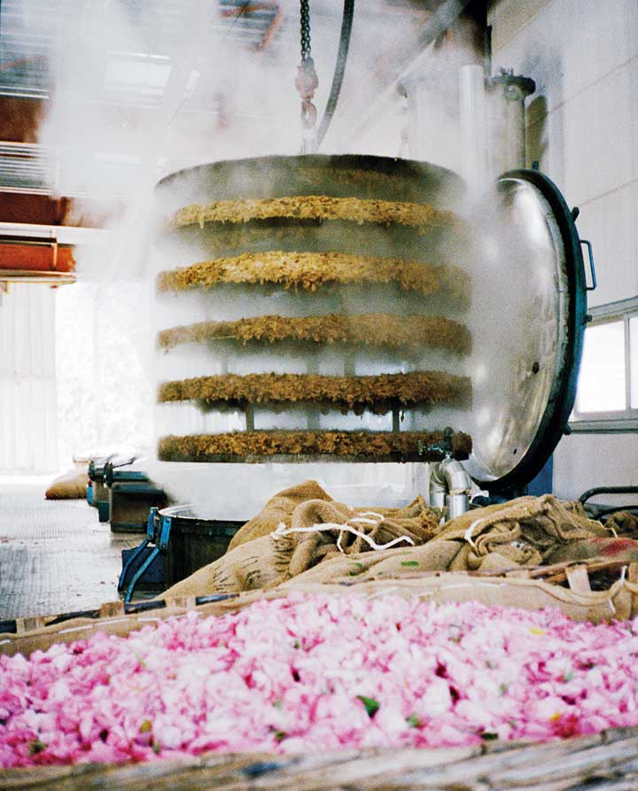 Rose petals in a production facility, Grasse, France