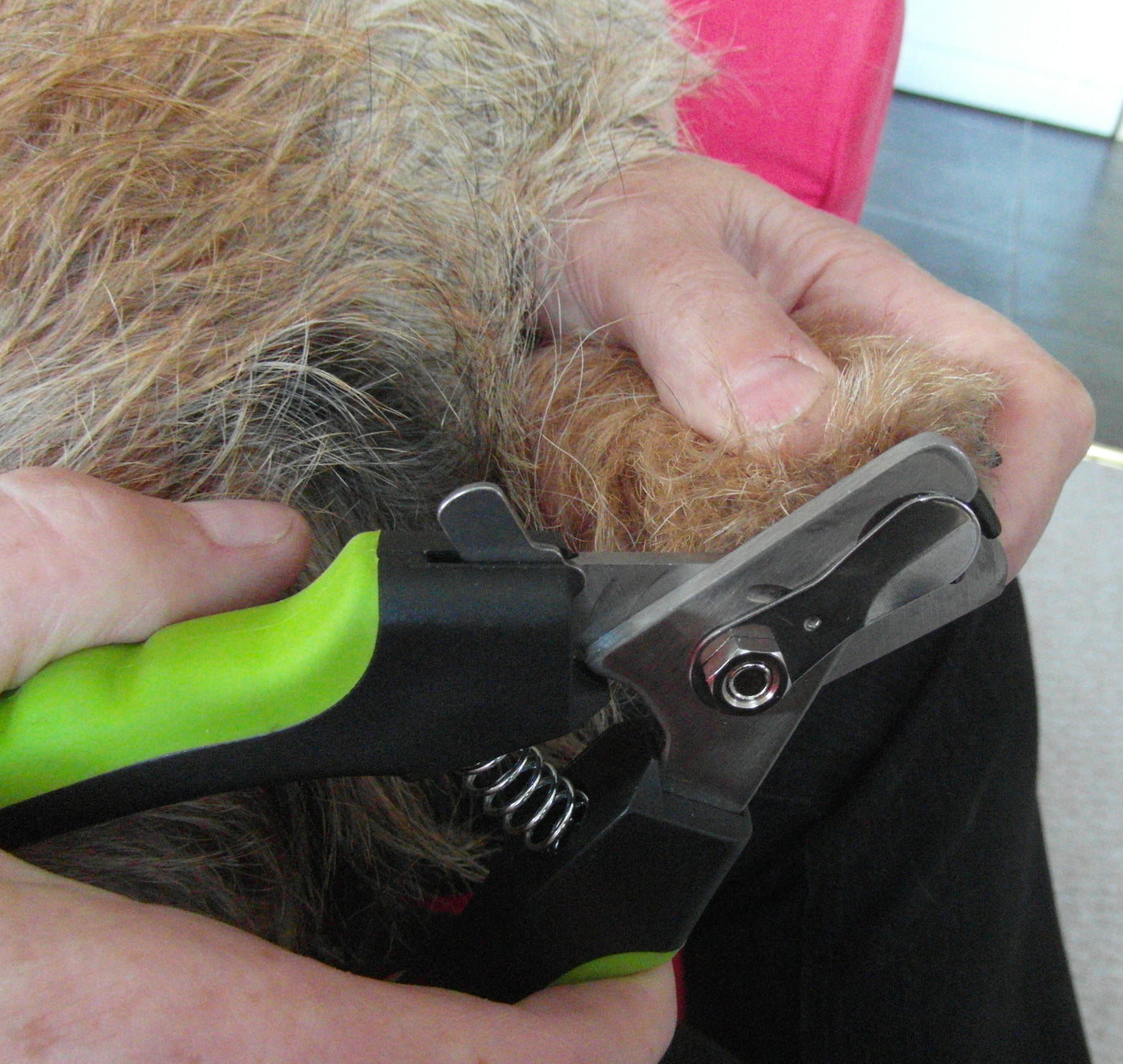 Professional Dog Nail Clippers Sharp Steel Blades Easy To Use