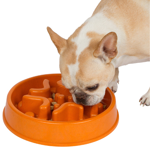 Unique Slow feed dog bowl designed by 2 veterinarians