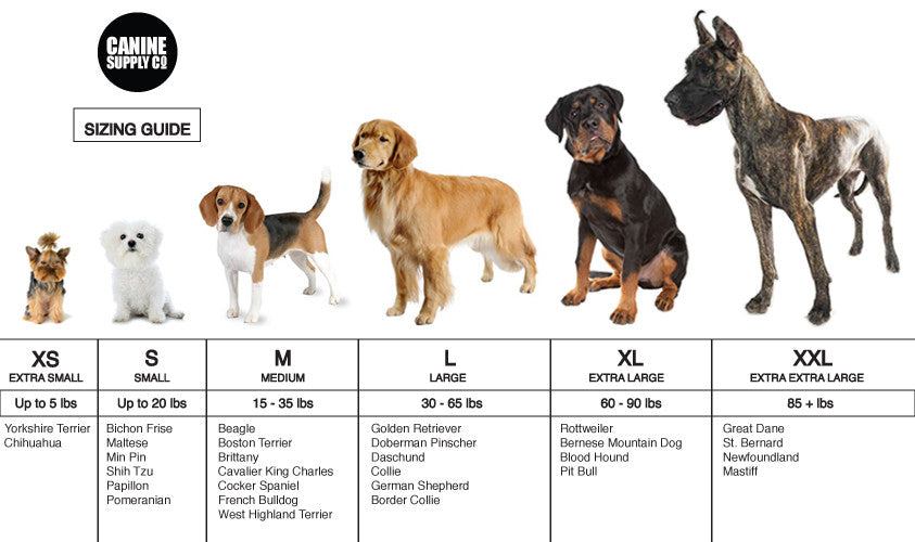 Small Dog Breeds Chart - Small breed dogs chart ...