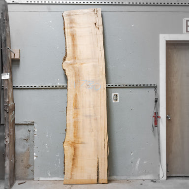 "95"" x 20"" Maple Slab"