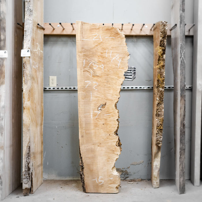 "72"" x 15"" Maple Burl Slab"