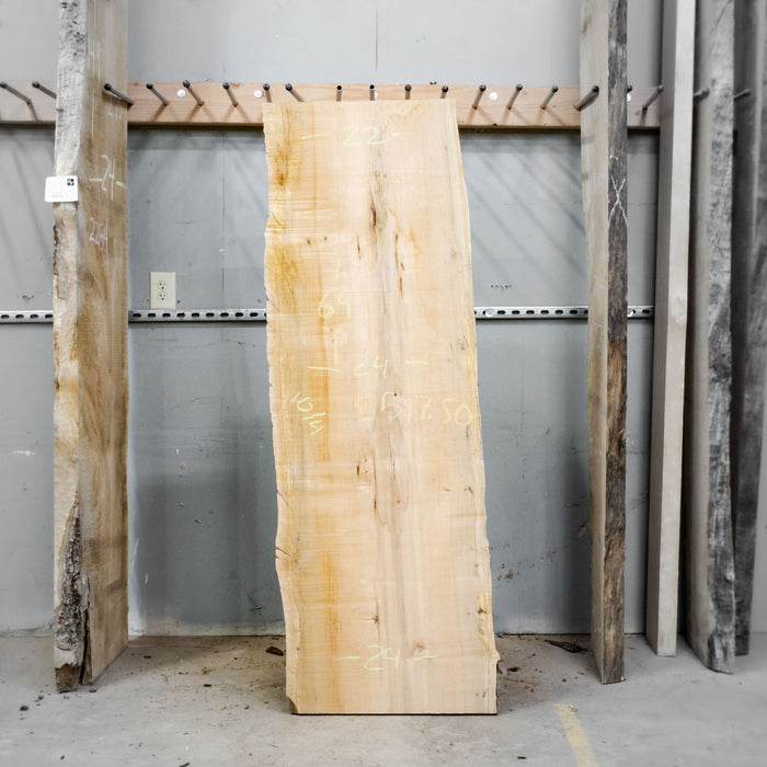"69"" x 24"" Maple Slab"