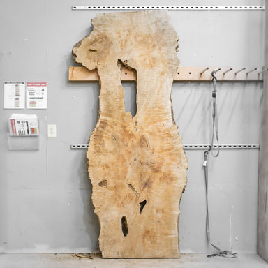 "98"" x 38"" Maple Burl Slab"
