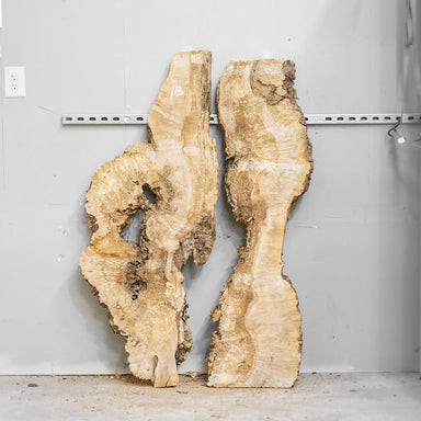 "54"" Maple Burl Slab Set 1"
