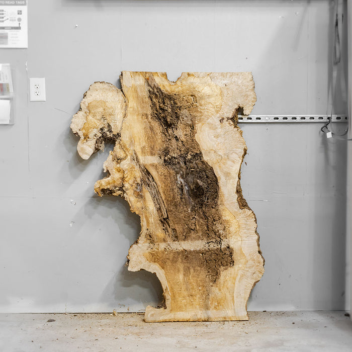 "54"" x 27"" Maple Burl Slab"