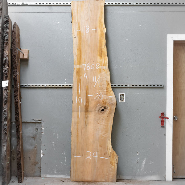 "101"" x 21"" Maple Slab"