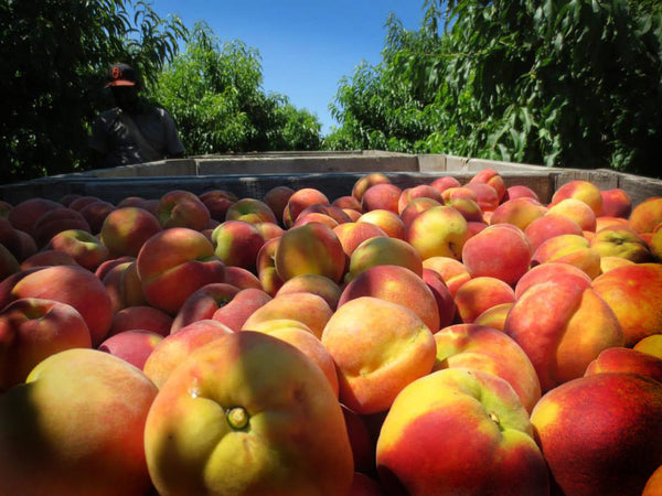 peaches from Taylor's Farms