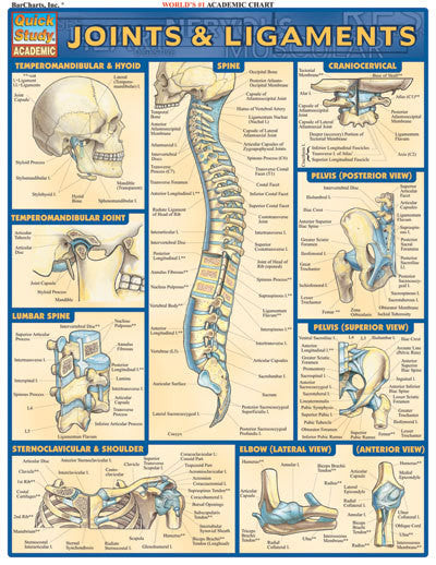 JOINTS & LIGAMENTS - Charles Darwin University Bookshop