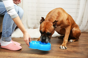 IS A RAW FOOD DIET RIGHT FOR MY DOGS